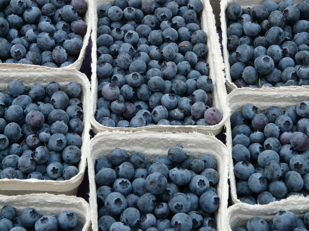 blueberry-61510_1280