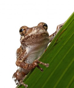 frog-164398_640